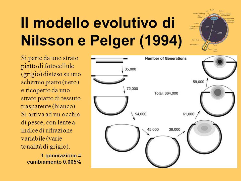 Il modello evolutivo di Nilsson e Pelger (1994)