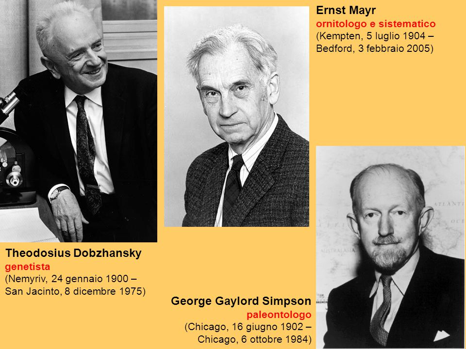 Ernst Mayr ornitologo e sistematico (Kempten, 5 luglio 1904 – Bedford, 3 febbraio 2005)