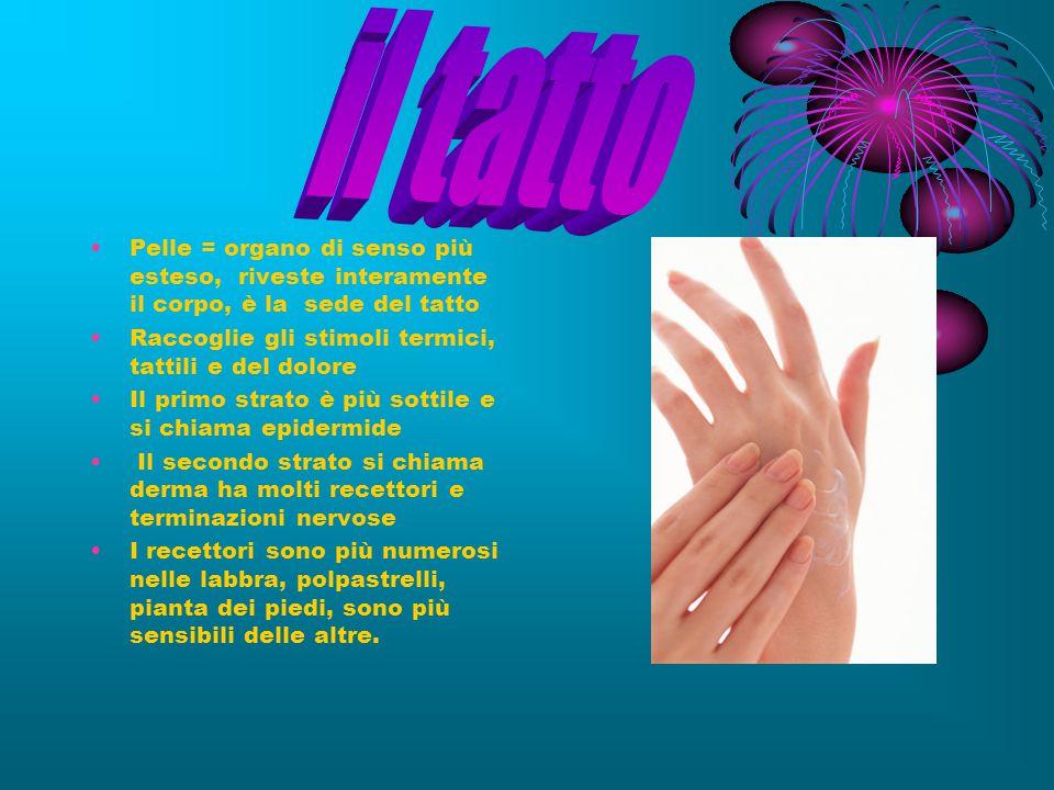 il tatto Pelle = organo di senso più esteso, riveste interamente il corpo, è la sede del tatto.