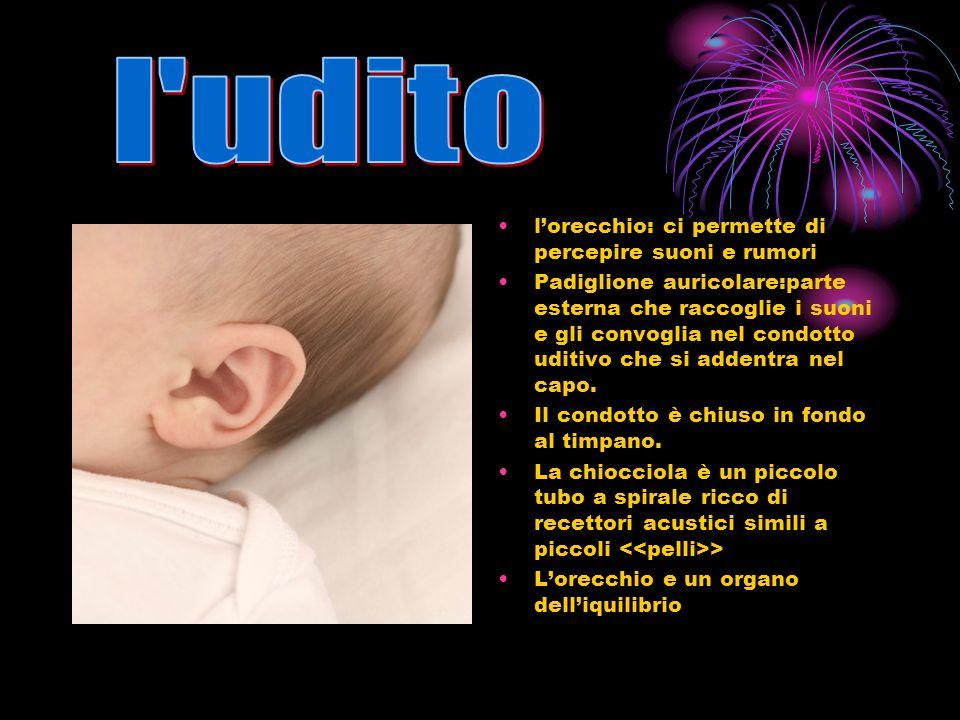 l udito l'orecchio: ci permette di percepire suoni e rumori