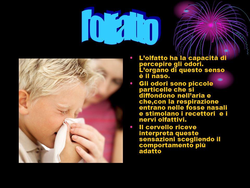 l olfatto L'olfatto ha la capacità di percepire gli odori. L'organo di questo senso è il naso.