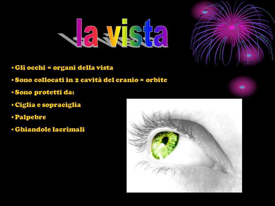 la vista Gli occhi = organi della vista