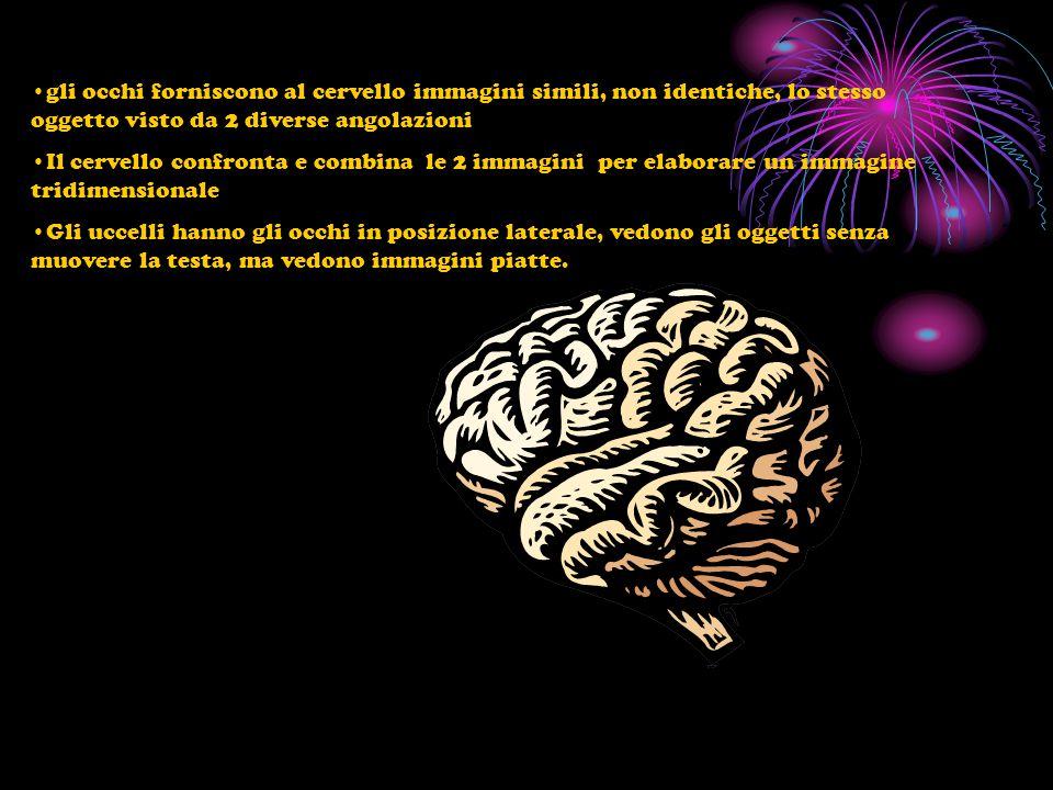 gli occhi forniscono al cervello immagini simili, non identiche, lo stesso oggetto visto da 2 diverse angolazioni