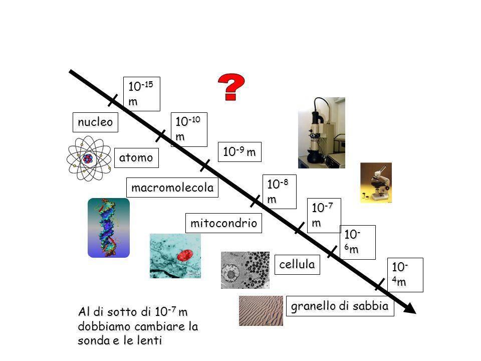 nucleo 10-15 m atomo 10-10 m macromolecola 10-9 m 10-8 m mitocondrio