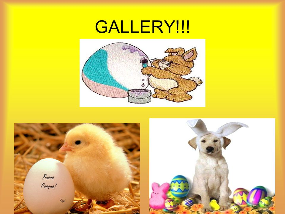 GALLERY!!!