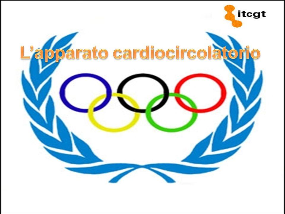 L'apparato cardiocircolatorio