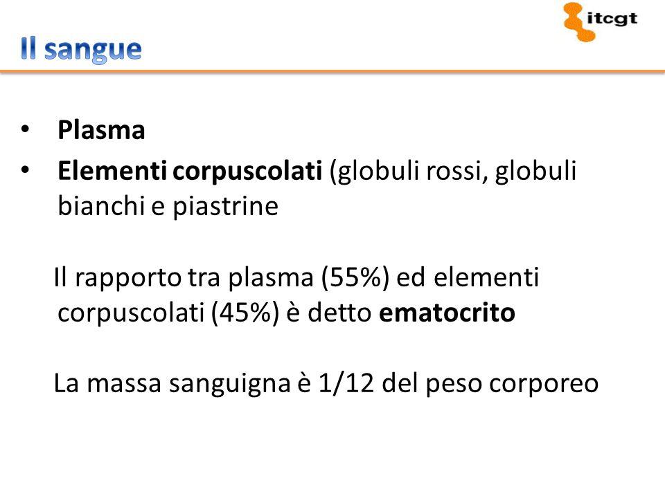 Il sangue Plasma. Elementi corpuscolati (globuli rossi, globuli bianchi e piastrine.