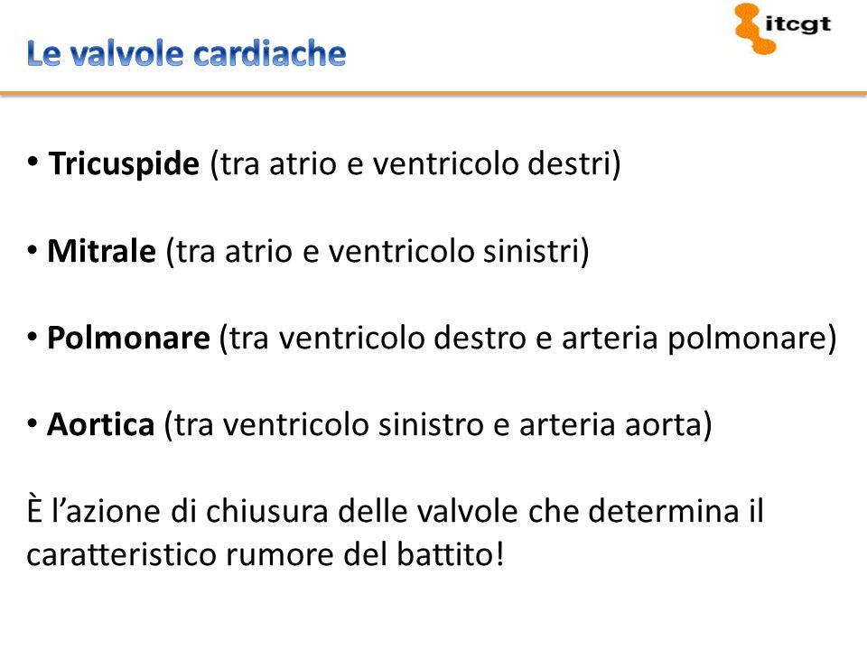 Tricuspide (tra atrio e ventricolo destri)