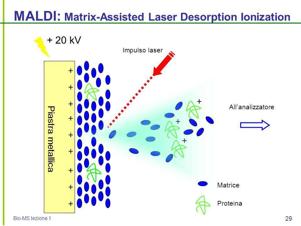 MALDI: Matrix-Assisted Laser Desorption Ionization