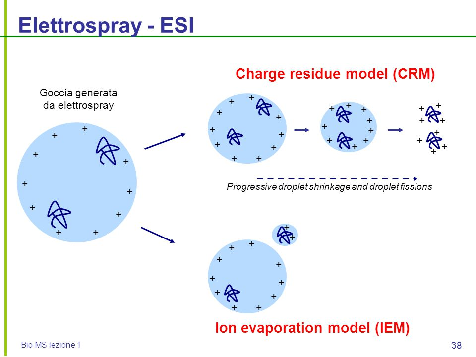 Charge residue model (CRM) Ion evaporation model (IEM)