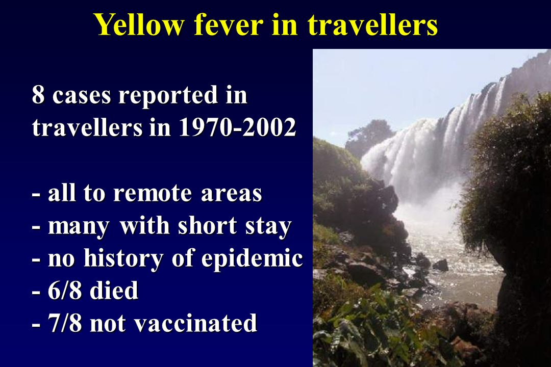 Yellow fever in travellers