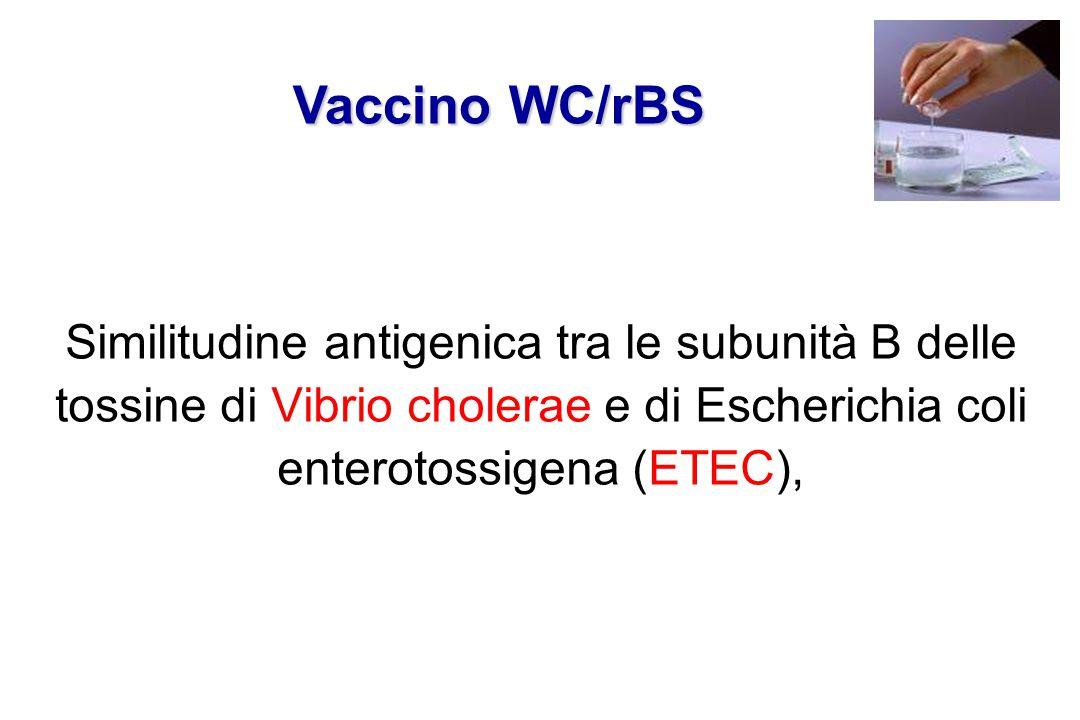 Vaccino WC/rBS Similitudine antigenica tra le subunità B delle tossine di Vibrio cholerae e di Escherichia coli enterotossigena (ETEC),
