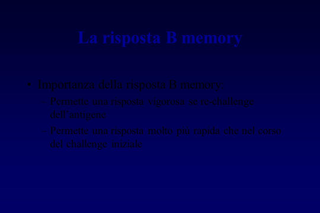 La risposta B memory Importanza della risposta B memory: