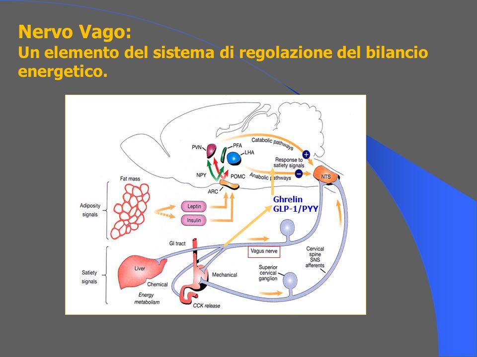Nervo Vago: Un elemento del sistema di regolazione del bilancio energetico. Ghrelin GLP-1/PYY