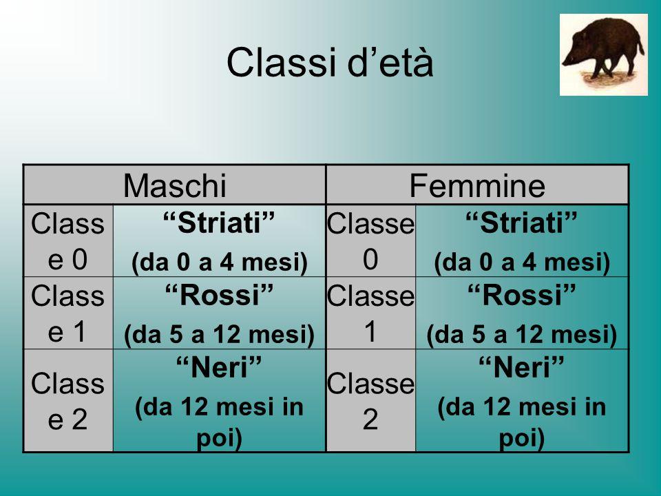 Classi d'età Maschi Femmine Classe 0 Striati Classe 1 Rossi Neri