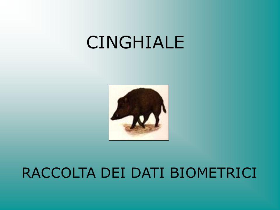 CINGHIALE RACCOLTA DEI DATI BIOMETRICI