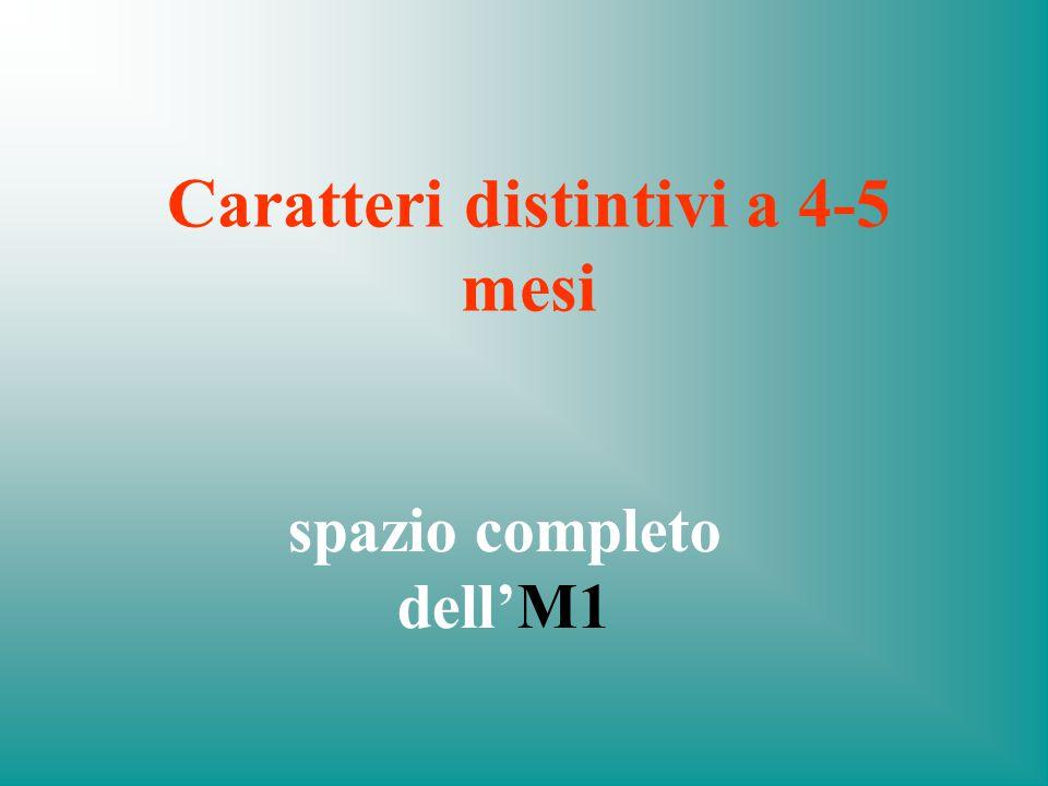 Caratteri distintivi a 4-5 mesi spazio completo dell'M1