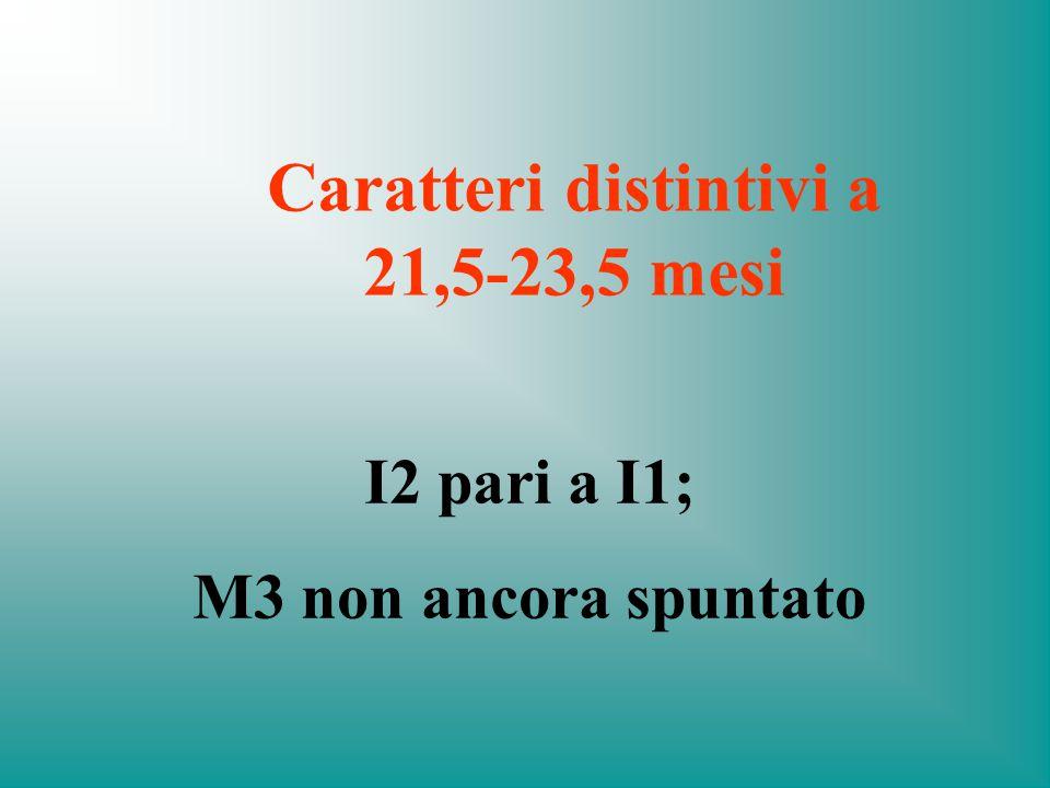 Caratteri distintivi a 21,5-23,5 mesi