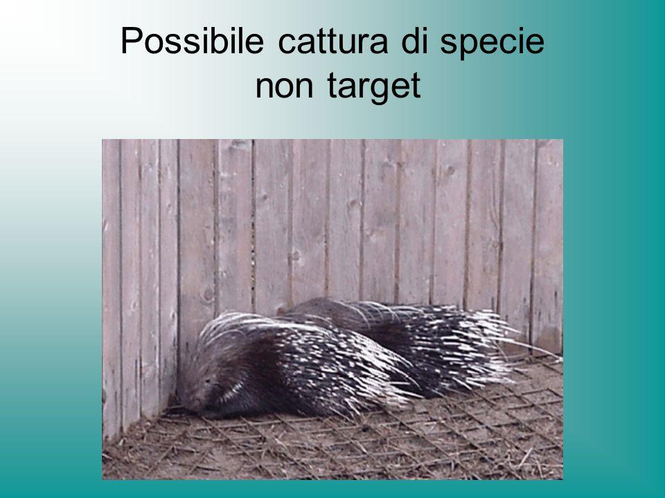 Possibile cattura di specie non target