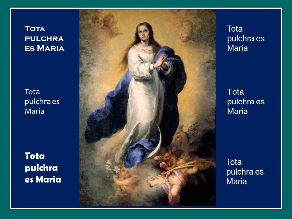 Tota pulchra es Maria Tota pulchra es Maria Tota pulchra es Maria