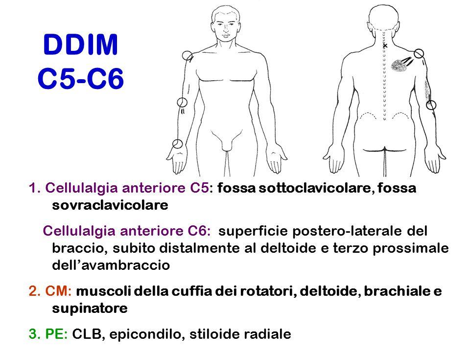 DDIM C5-C6 1. Cellulalgia anteriore C5: fossa sottoclavicolare, fossa sovraclavicolare.