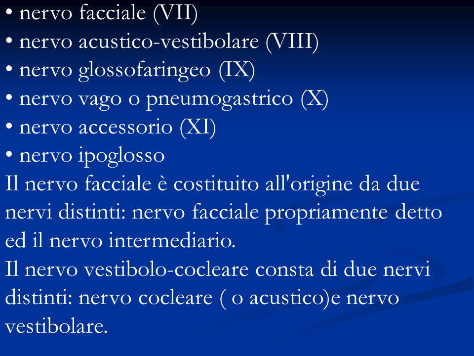 nervo facciale (VII) nervo acustico-vestibolare (VIII) nervo glossofaringeo (IX) nervo vago o pneumogastrico (X)