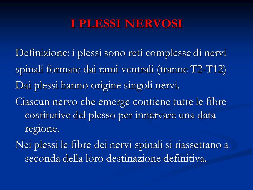 I PLESSI NERVOSI Definizione: i plessi sono reti complesse di nervi