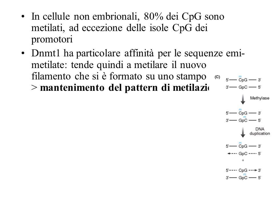 In cellule non embrionali, 80% dei CpG sono metilati, ad eccezione delle isole CpG dei promotori