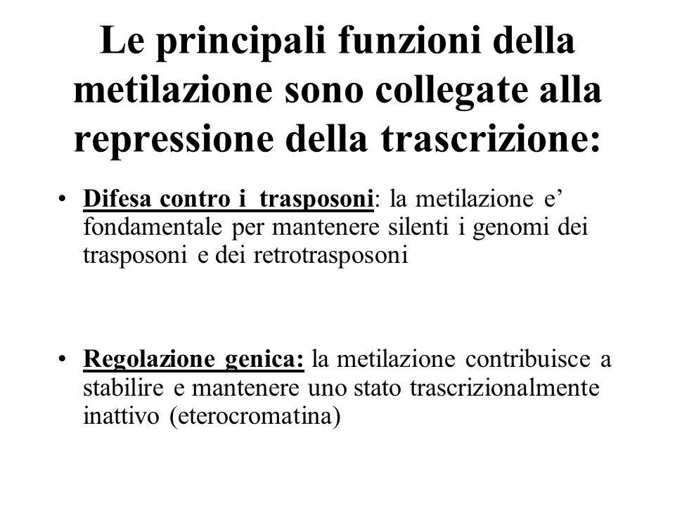 Le principali funzioni della metilazione sono collegate alla repressione della trascrizione: