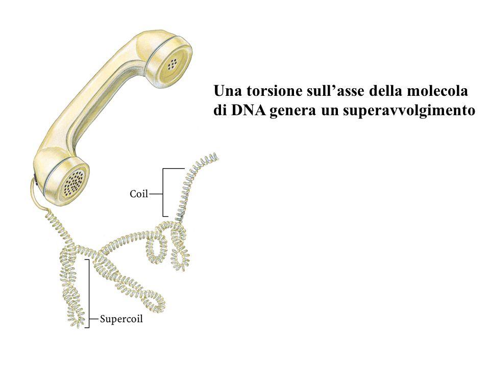 Una torsione sull'asse della molecola