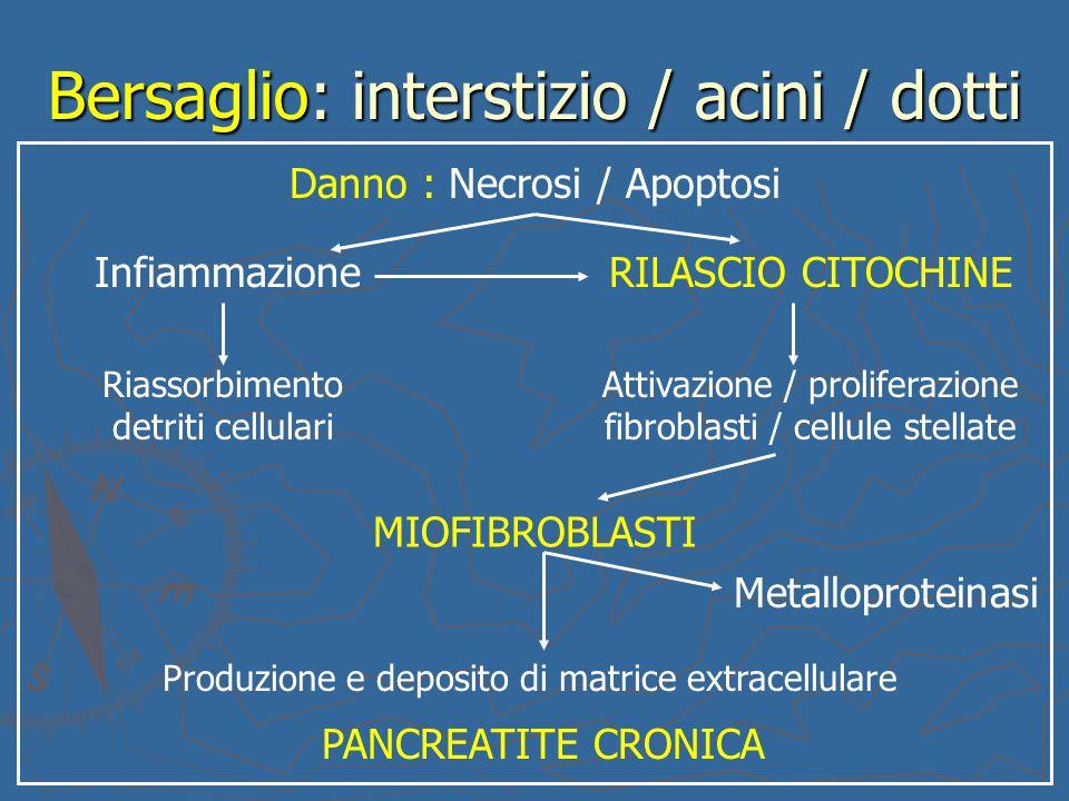 Bersaglio: interstizio / acini / dotti