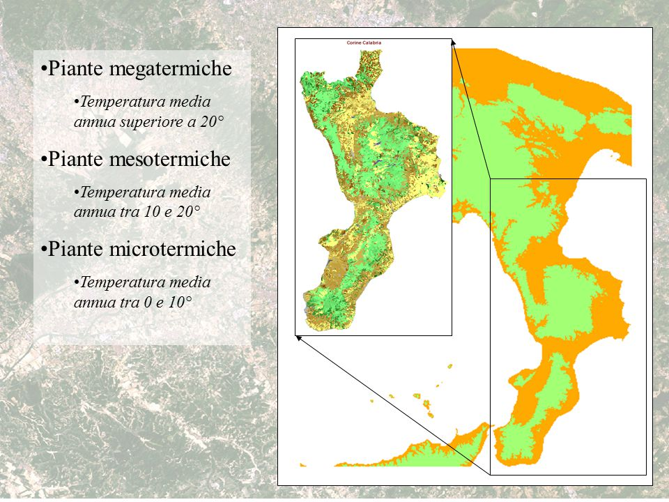 Piante megatermiche Piante mesotermiche Piante microtermiche