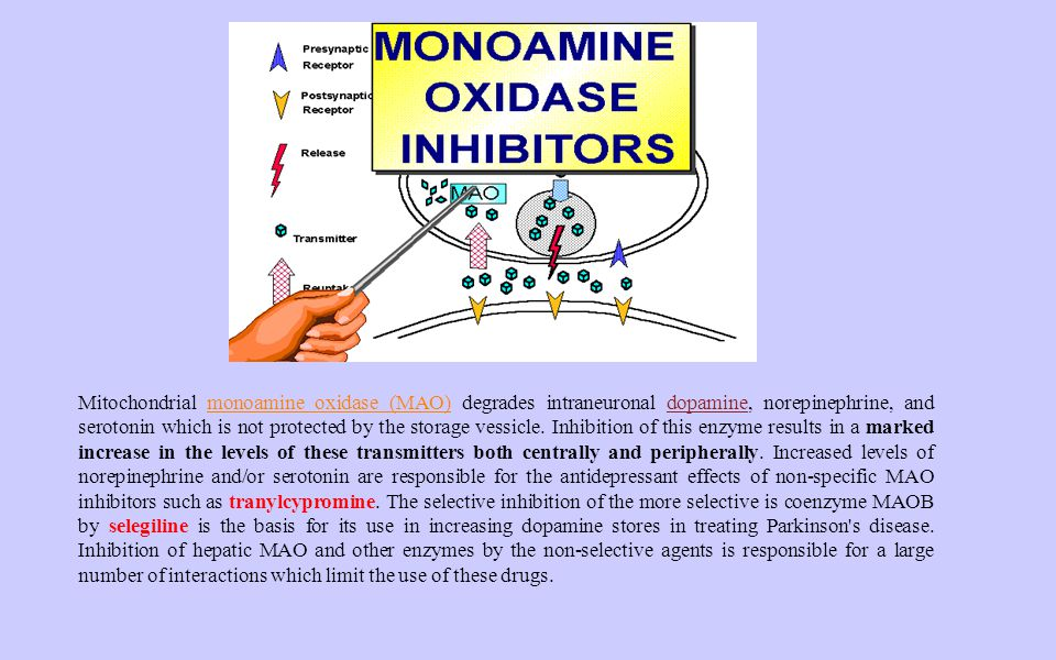 Mitochondrial monoamine oxidase (MAO) degrades intraneuronal dopamine, norepinephrine, and serotonin which is not protected by the storage vessicle.