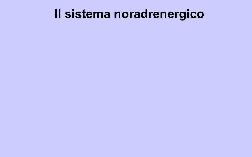 Il sistema noradrenergico