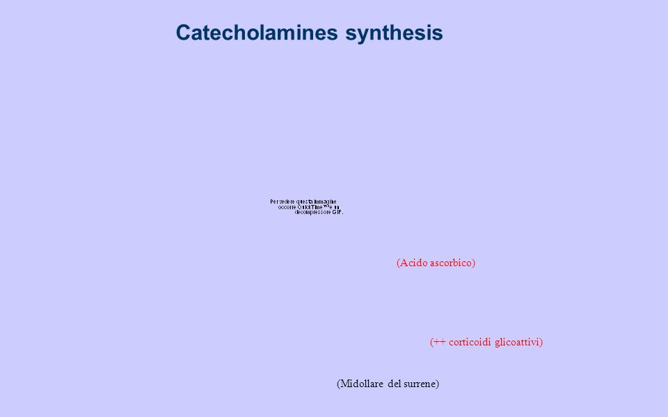 Catecholamines synthesis