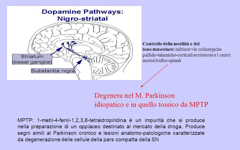 Degenera nel M. Parkinson idiopatico e in quello tossico da MPTP