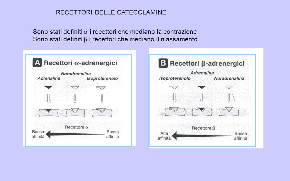 RECETTORI DELLE CATECOLAMINE