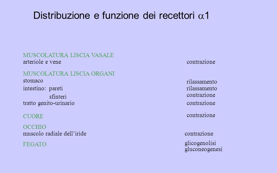 Distribuzione e funzione dei recettori a1