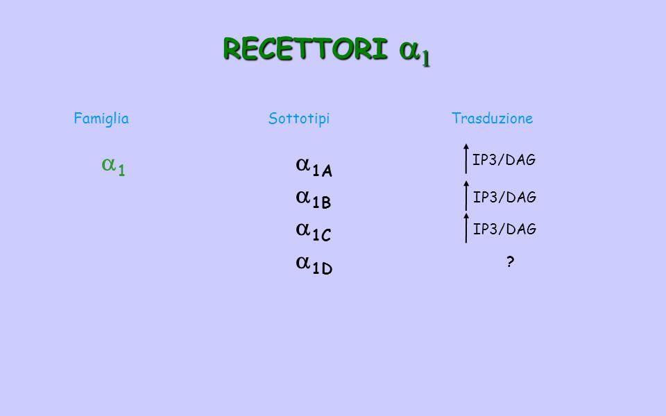 RECETTORI a1 1 1A 1B 1C 1D Famiglia Sottotipi Trasduzione IP3/DAG
