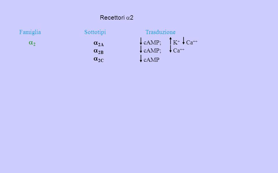 2 2A 2B 2C Recettori a2 Famiglia Sottotipi Trasduzione cAMP; K+