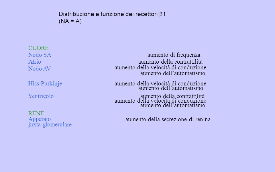 Distribuzione e funzione dei recettori b1