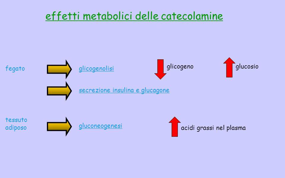 effetti metabolici delle catecolamine