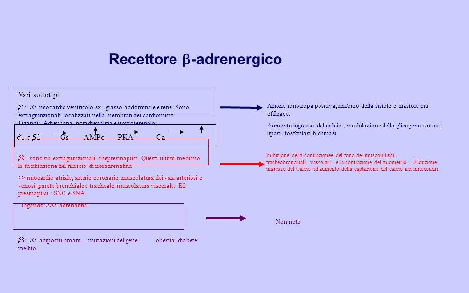 Recettore b-adrenergico
