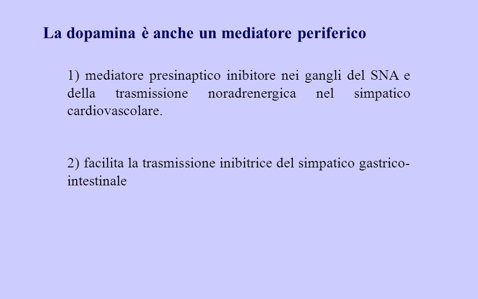 La dopamina è anche un mediatore periferico