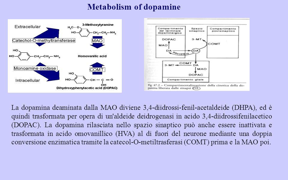 Metabolism of dopamine