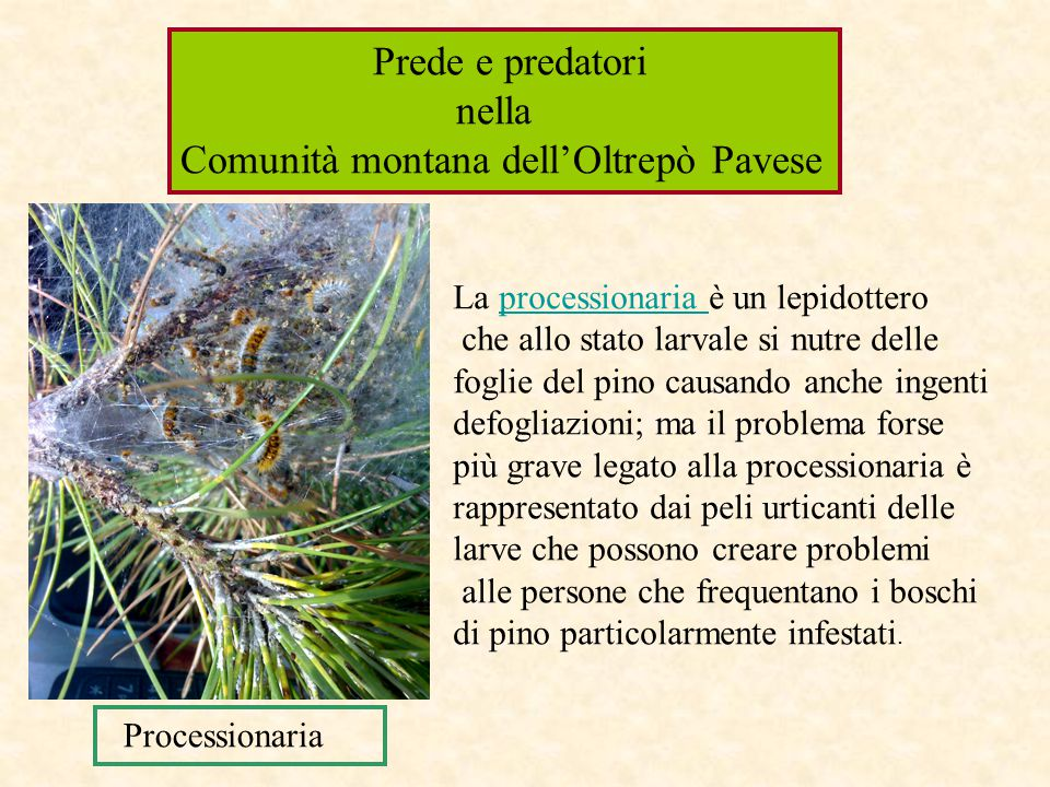 Comunità montana dell'Oltrepò Pavese