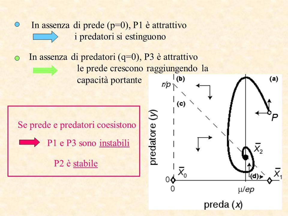In assenza di prede (p=0), P1 è attrattivo