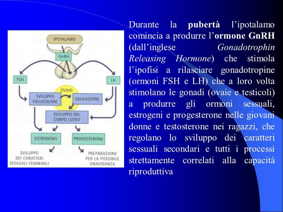 Durante la pubertà l'ipotalamo comincia a produrre l'ormone GnRH (dall'inglese Gonadotrophin Releasing Hormone) che stimola l'ipofisi a rilasciare gonadotropine (ormoni FSH e LH) che a loro volta stimolano le gonadi (ovaie e testicoli) a produrre gli ormoni sessuali, estrogeni e progesterone nelle giovani donne e testosterone nei ragazzi, che regolano lo sviluppo dei caratteri sessuali secondari e tutti i processi strettamente correlati alla capacità riproduttiva