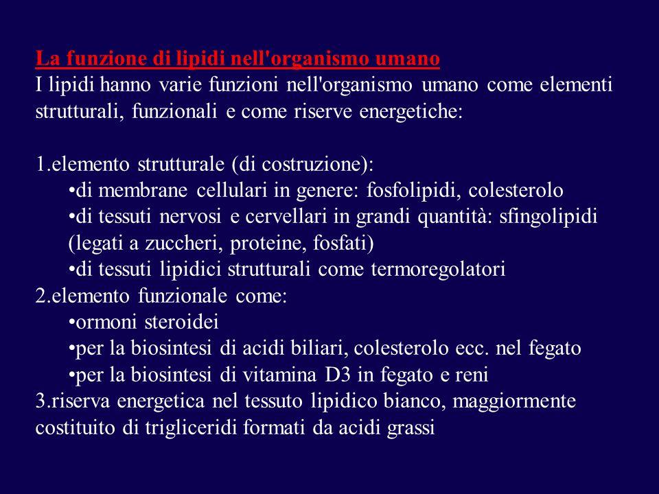 La funzione di lipidi nell organismo umano