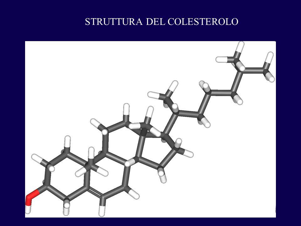 STRUTTURA DEL COLESTEROLO
